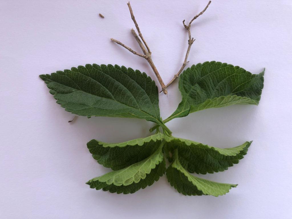 cuadros con hojas y elementos naturales